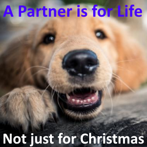 A dog that is a partner for life